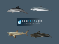 Carden - Bottlenose Dolphins Ecoventures Featured