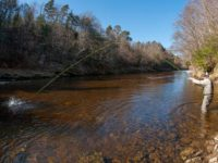 Carden Cottages - Guided Salmon Fishing In Moray